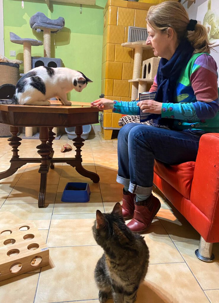 Baldrian stellen katze ruhig Wie Sie