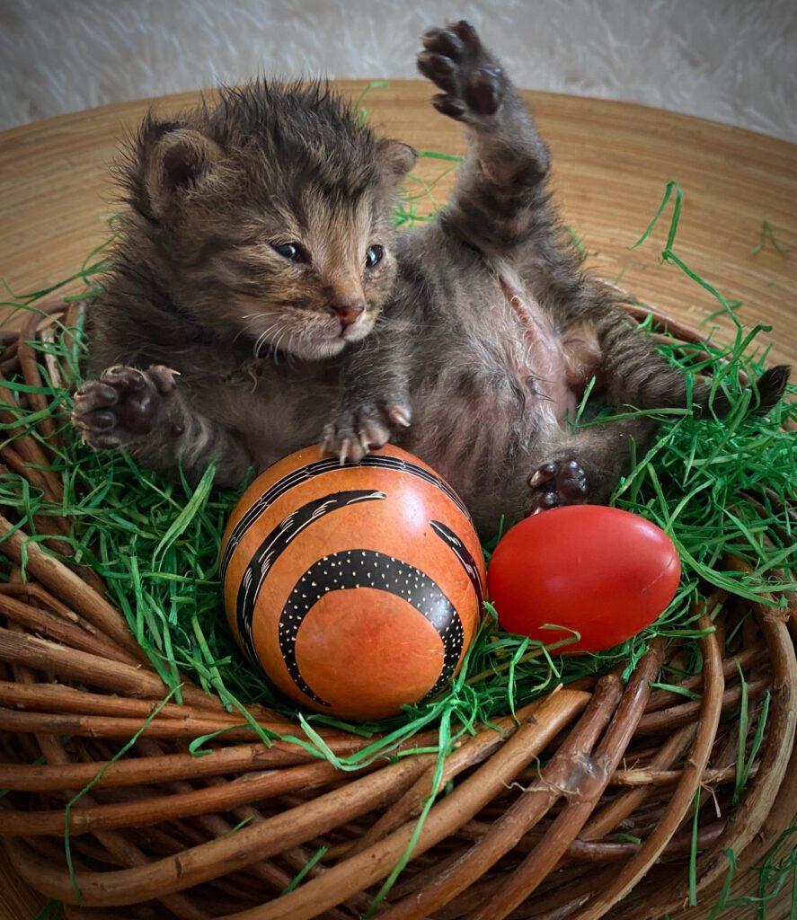 Frohes Osterfest wünscht euer Katzenland!