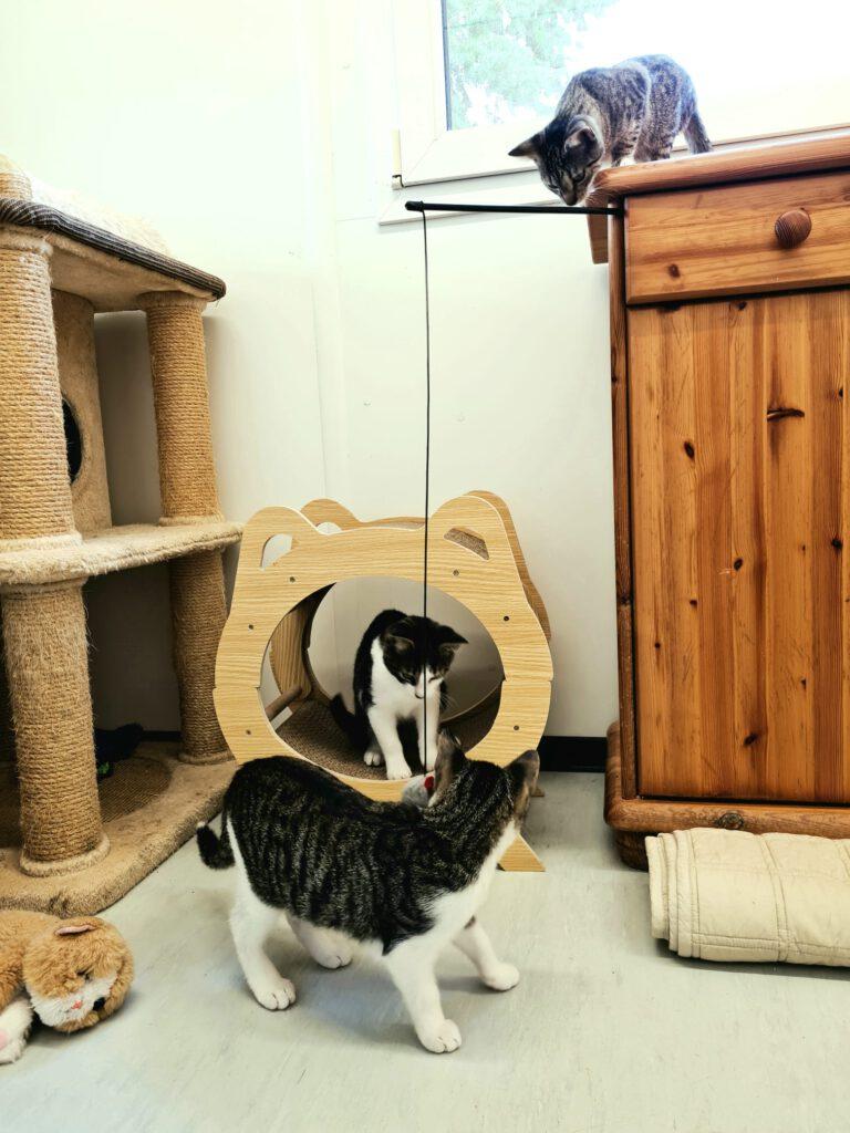 Kitten suchen in Zuhause.